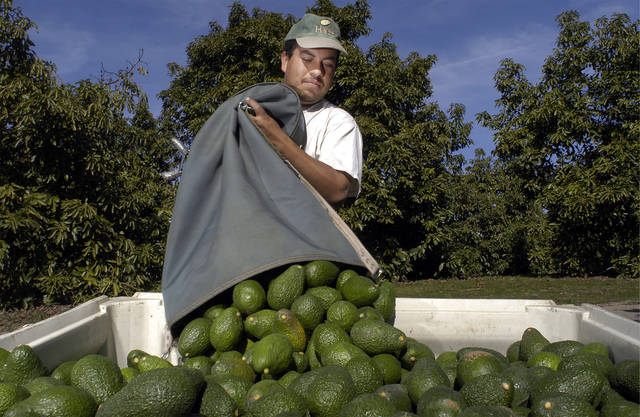 News of the Weird: An overreaction over french fries and avocado thieves