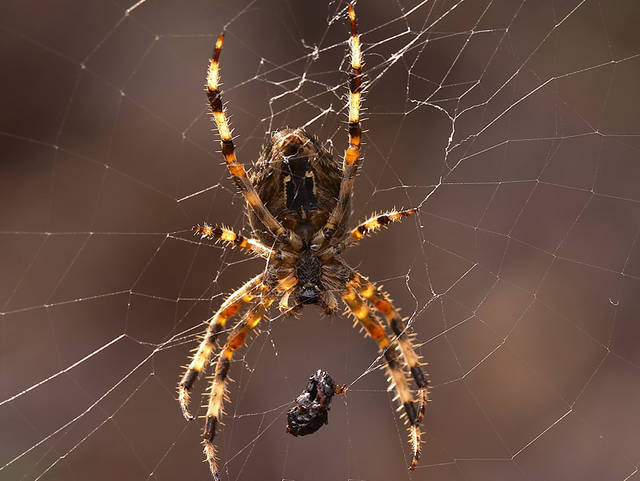 News of the Weird: Beef jerky bouquets and hungry, hungry arachnids