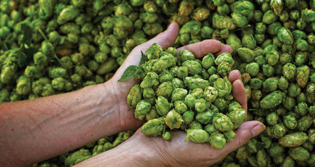 Tap This: Love of hops depends on the palate of the individual beer drinker